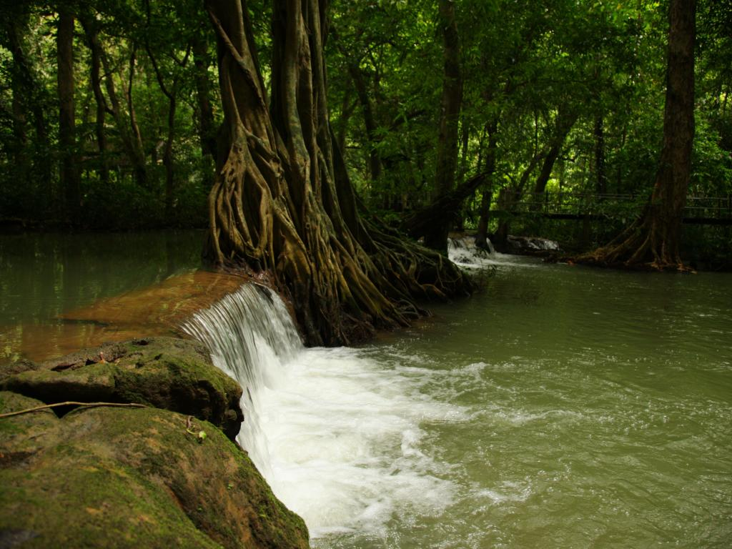 Full-Day Krabi Rainforest Discovery Tour